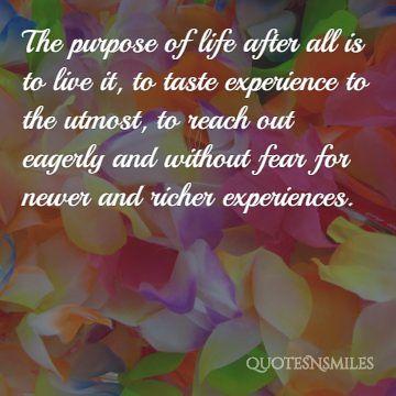 taste experience